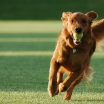 Fetch, dog walk, dog walking, dog walker newcastle, dog walker heaton, dog walker gosforth