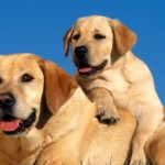 Dogs-Playing, puppy, puppy visit, puppy training newcastle