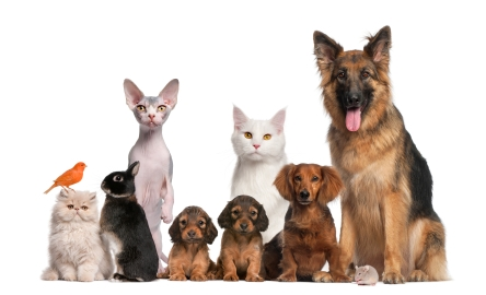 Pet-sitting, pets, pet minding, house sitting, puppy sitting, puppy visits, best walking dogs, Old dog care