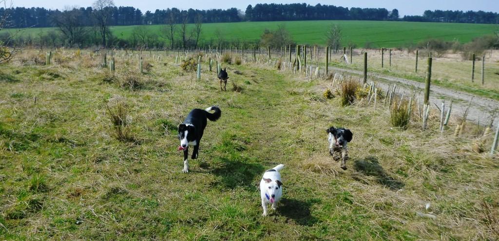 Group Dog Walk